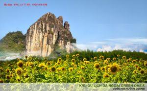Vườn hoa hướng dương, khu du lịch dã ngoại Green Oasis